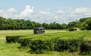 America's Own Tea Garden